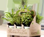 RaveraBio - Piante aromatiche biologiche
